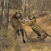 The Gateway of Wildlife (Land Package) Tour