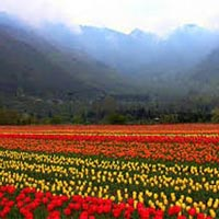 Srinagar Tour Package 5Days & 4 Nights.