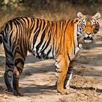 Short Escape to Gir 3 Days / 2 Nights Tour