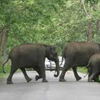 Wayanad – Mysore – Bangalore - 3 Nights / 4 days Tour