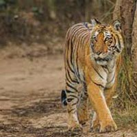 Luxury Wildlife Tours India