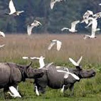 Assam with Kaziranga Tour