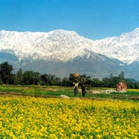 Romantic Rendezvous With Himalayas in Dharamshala Tour