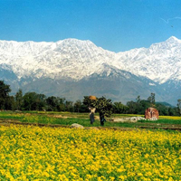 Magestic Kangra Valley Tour