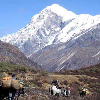 Siliguri- Gangtok- Pelling 10 Days Tour