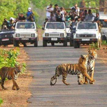 Short Escape to Pench Tour