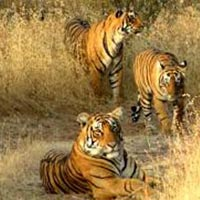 Golden Triangle with Ranthambhore and Mumbai Tour