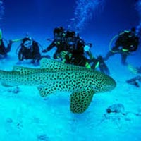 Experience Andaman Holiday