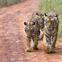 Maharashtra Wildlife Holiday Package