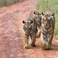 Maharashtra Wildlife Holiday Package