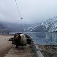 Gantok: 5 Nights 6 Days Sikkim Old Silk Route Tour Extra Vaganza.