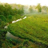 Jaldapara-Lataguri Tour