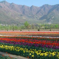 Exclusive Srinagar Tour Package