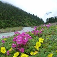 Gangtok - Guru Dongmar - Yumthung Valley Tours(06N/07Days)