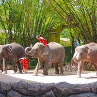 Phuket – Pattaya – Bangkok 8 Days Tour Package
