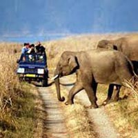 Nainital- Corbett Tour Package