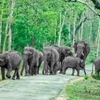 Short Escape to Bandipur National Park