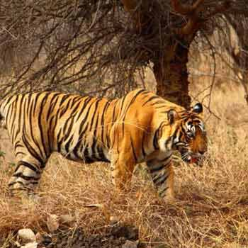 Golden Triangle with Sariska Tiger Reserve Tour