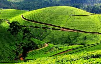 Splendid Kerala Tour Package 6 Days Tour