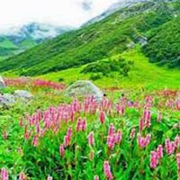 Valley of Flower Tour