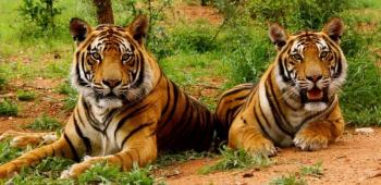 The Golden Triangle with Corbett National Park Tour