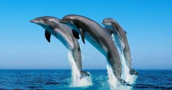 Dolphin Spotting Trip Tour