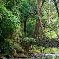 7 Days Guwahati with Shillong Tour