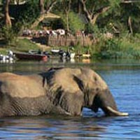 Safari: Best of Zambia (Basic) Tour