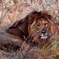 Safari: Best of Zambia (Formula Standard)