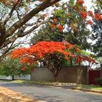 Safari: Complete South Luangwa (Formula Camping ) Tour