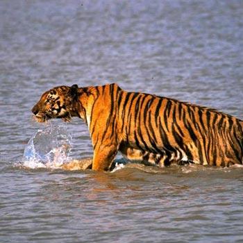 Sundarban Best Tour Package