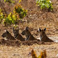 Rajaji Tiger Reserve Jungle Stay Tour