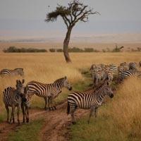 Best Of Kenya Tour