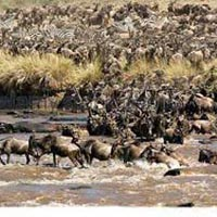 8 Days Amboseli, Lake Nakuru & Maasai Mara Game Reserve Tour