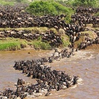 Migration Itinerary Tour