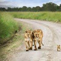 8 Days Amboseli, Lake Nakuru & Maasai Mara Game Reserve Tour
