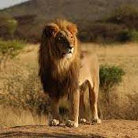 Wildlife and Heritage Tour of Gujarat