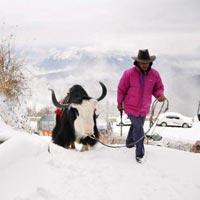 Nainital / Jim Corbett / Haridwar / Mussoorie Standard Package (7 Days / 6 Nights)