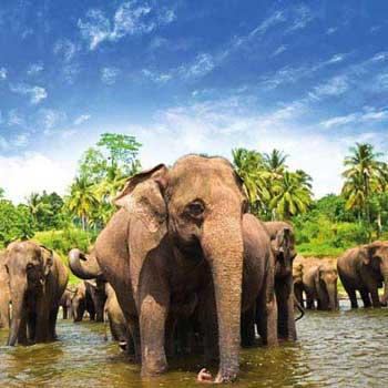 Highlights of Sri Lanka  5 Nights/ 6 Daystour