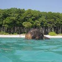 Andaman Tour 5N 6D
