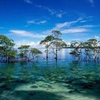 Best Andaman Tour