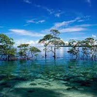 Best Andaman Tour