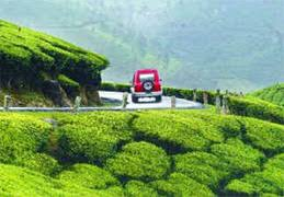 Assam Tea Tasting Tour Package