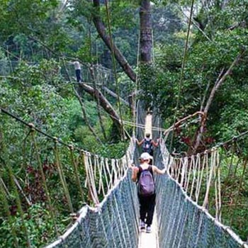 Taman Negara National Park Package