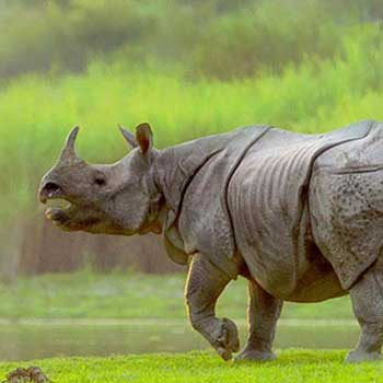 Kaziranga Safari Tour