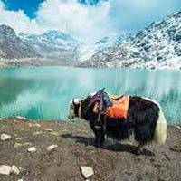 Delightful North East with Pelling Tour