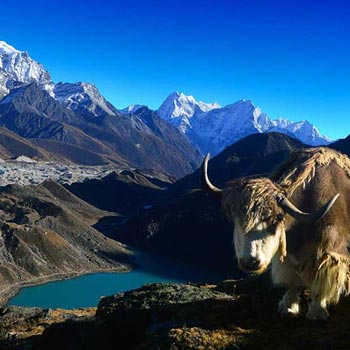 Everest & Gokyo Lakes Trekking Tour