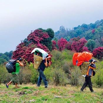 Kancendzonga Uttarey Trek Trekking Tour