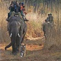 Bhandhavgarh National Park Tour With Safari