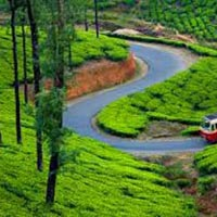 Kerala Munnar Travel Guide Tour